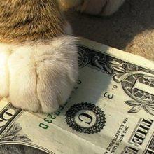 Как кот-инвестор обошел профессионалов