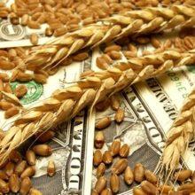 Как торговать фьючерсами на пшеницу: краткий обзор от эксперта