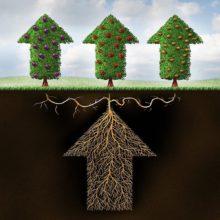 Как диверсификация повышает доходность: советы опытного инвестора