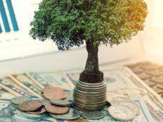 Как заработать на дивидендах: самое главное